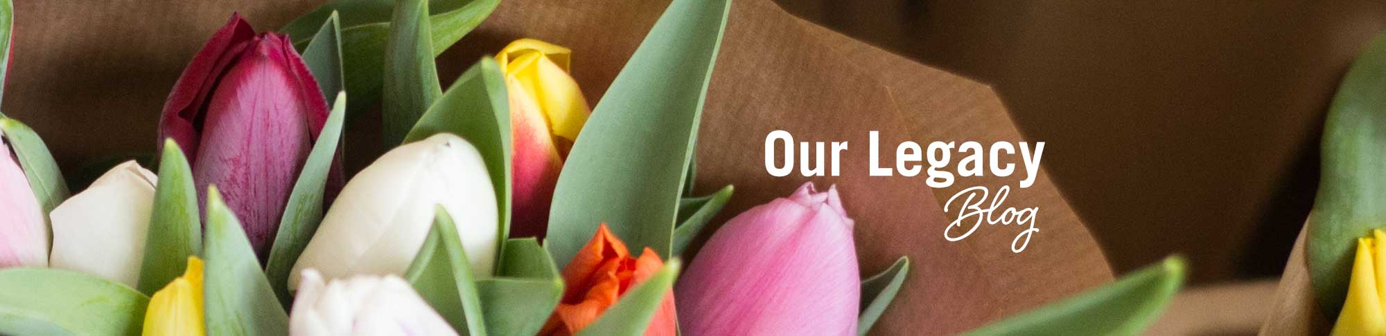Blog-Spring